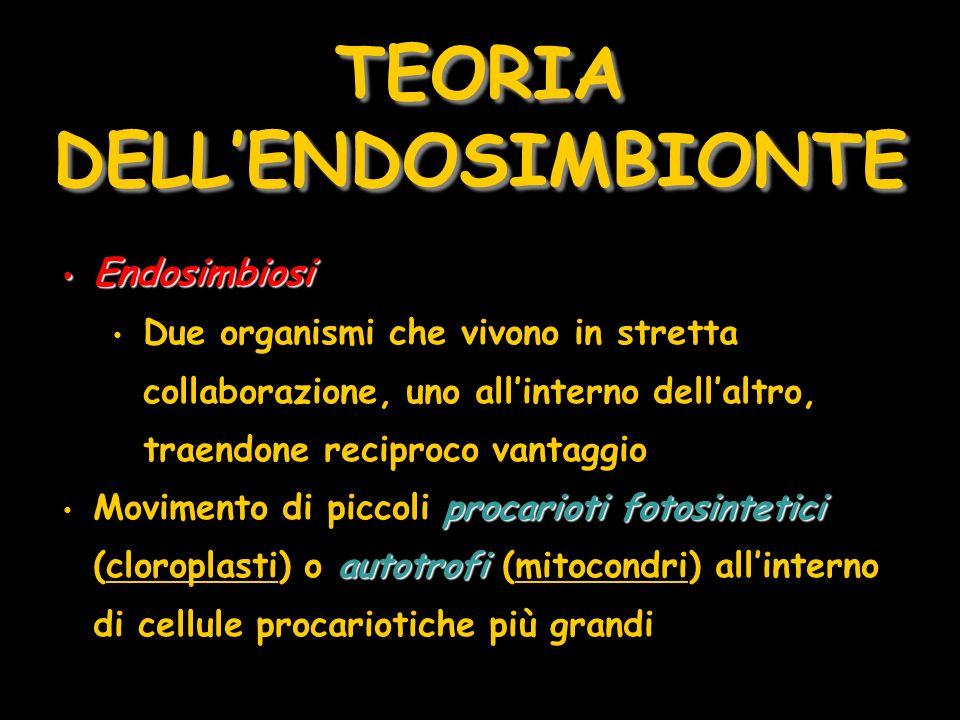 TEORIA DELLENDOSIMBIONTE Endosimbiosi Endosimbiosi Due organismi che vivono in stretta collaborazione, uno allinterno dellaltro, traendone reciproco v