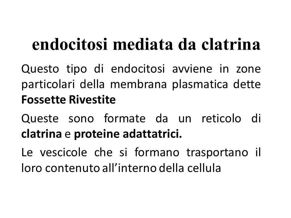 Gemmazione di una fossetta rivestita da clatrina clatrina