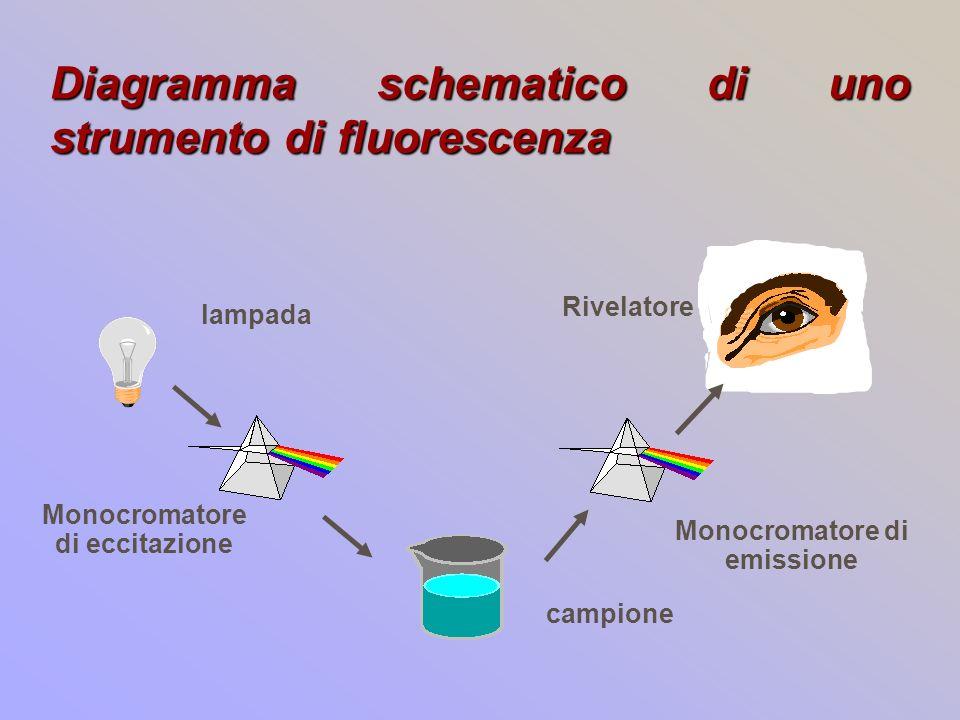 Diagramma schematico di uno strumento di fluorescenza Monocromatore di eccitazione Monocromatore di emissione campione lampada Rivelatore