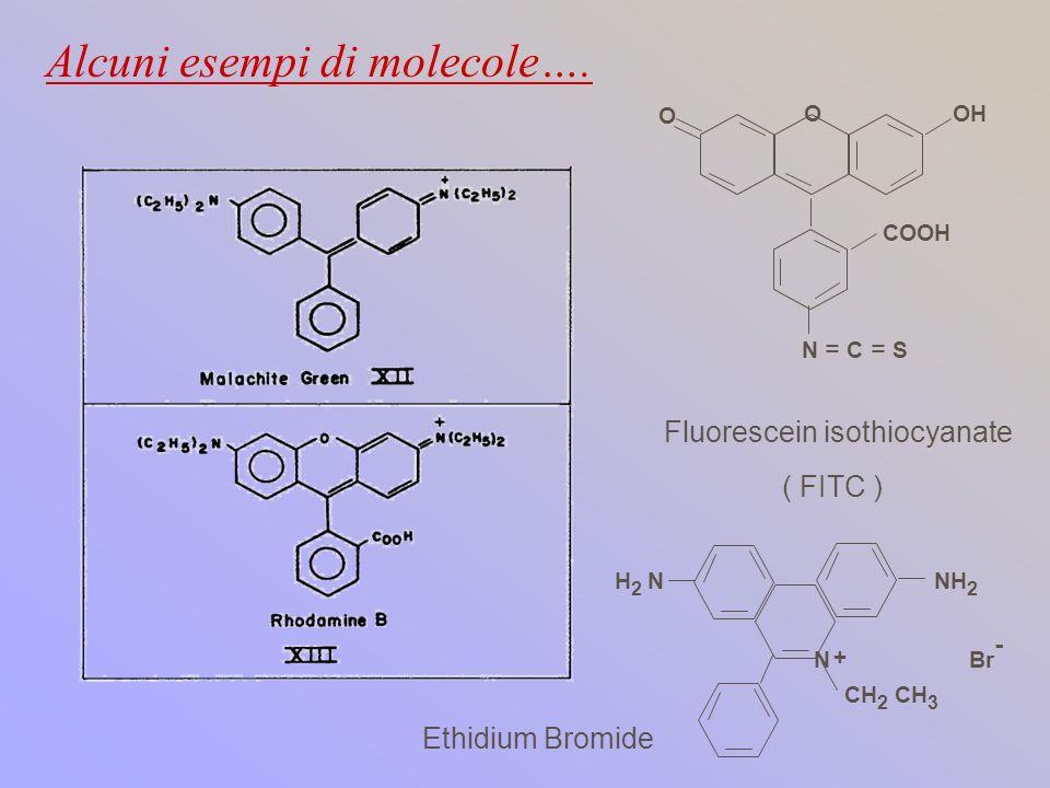 N NH 2 H 2 N + CH 2 CH 3 Br - Ethidium Bromide N = C = S O OOH Fluorescein isothiocyanate ( FITC ) COOH Alcuni esempi di molecole….
