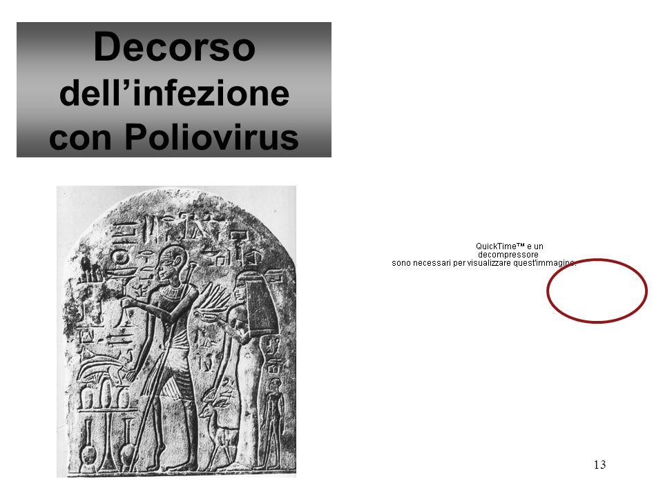 13 Decorso dellinfezione con Poliovirus