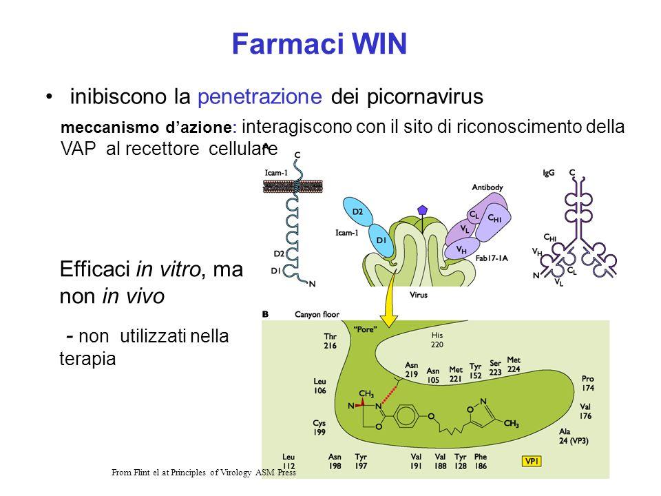17 Farmaci WIN inibiscono la penetrazione dei picornavirus Efficaci in vitro, ma non in vivo - non utilizzati nella terapia From Flint el at Principle