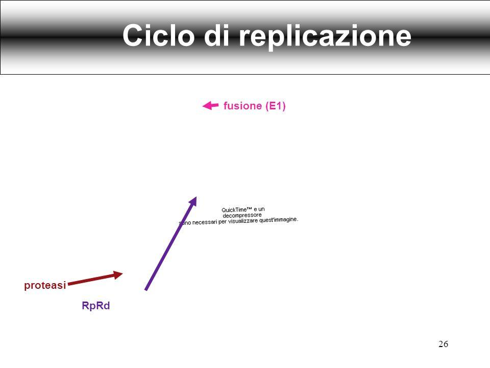 26 proteasi RpRd fusione (E1) Ciclo di replicazione
