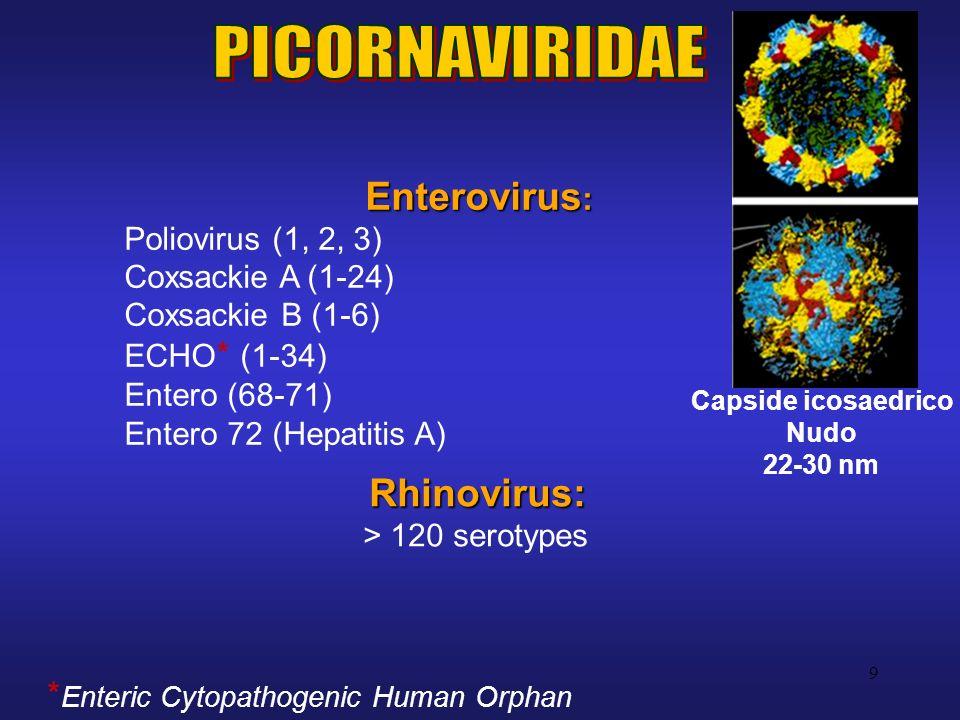 9 Enterovirus : Poliovirus (1, 2, 3) Coxsackie A (1-24) Coxsackie B (1-6) ECHO * (1-34) Entero (68-71) Entero 72 (Hepatitis A) Rhinovirus: > 120 serot