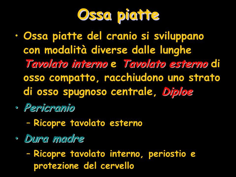 Ossa piatte Tavolato internoTavolato esterno DiploeOssa piatte del cranio si sviluppano con modalità diverse dalle lunghe Tavolato interno e Tavolato