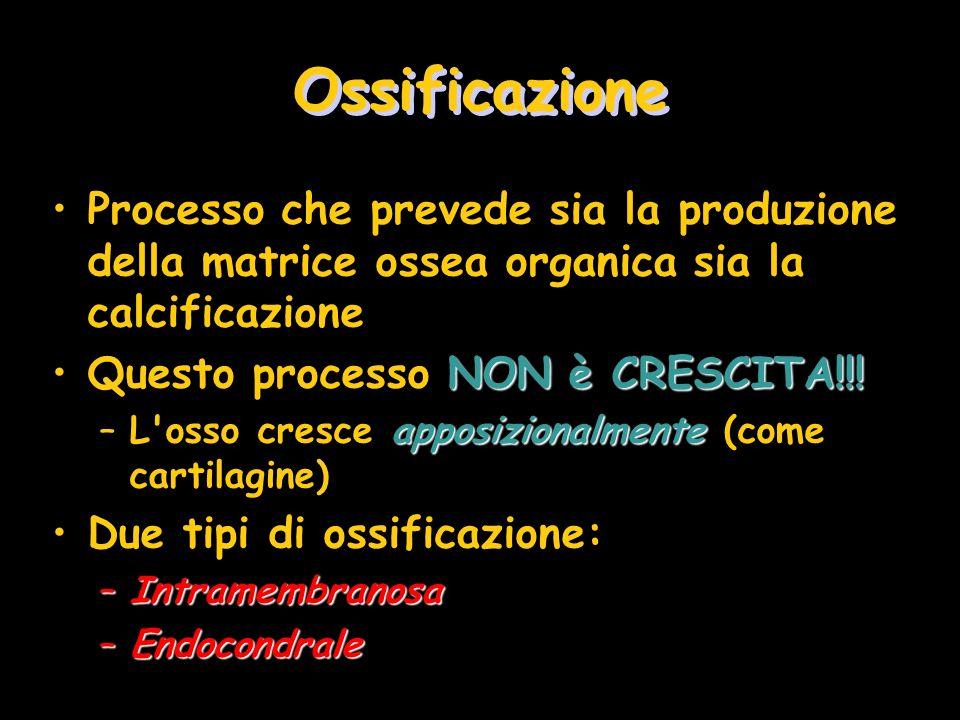 Ossificazione Processo che prevede sia la produzione della matrice ossea organica sia la calcificazione NON è CRESCITA!!!Questo processo NON è CRESCIT