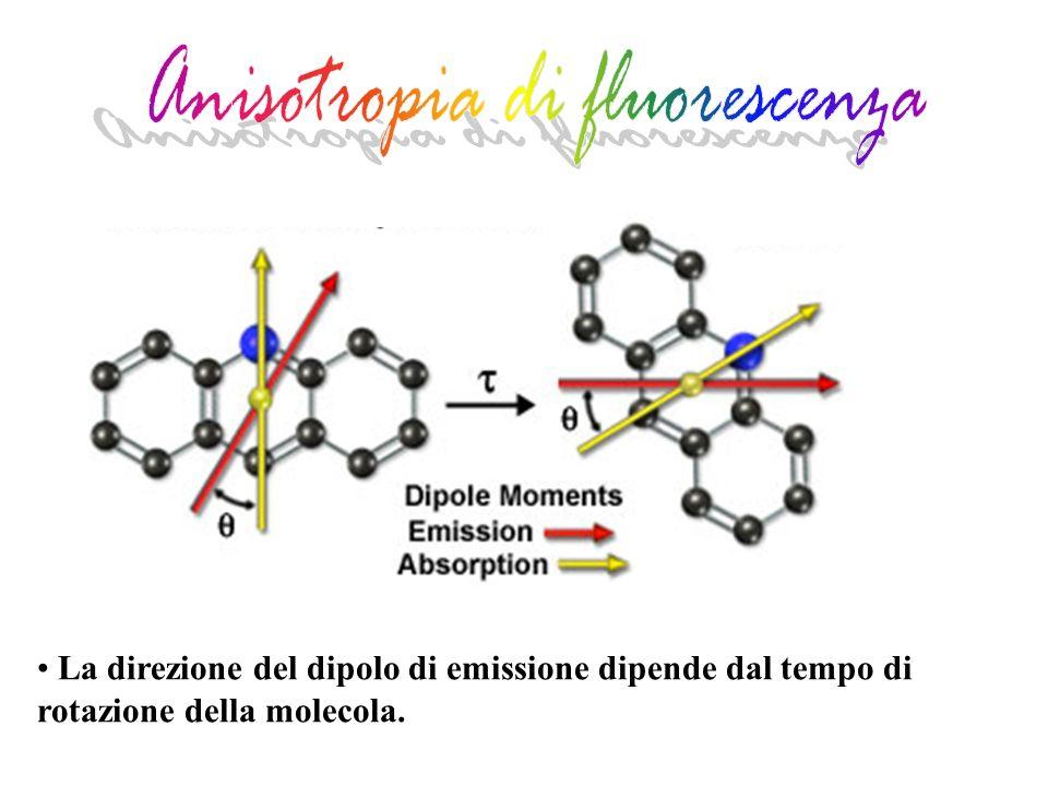 La direzione del dipolo di emissione dipende dal tempo di rotazione della molecola.