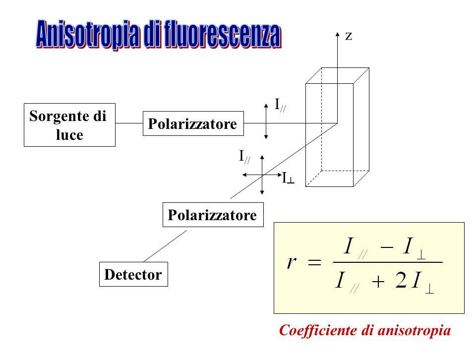 Sorgente di luce Polarizzatore z I // I Detector Coefficiente di anisotropia Polarizzatore I //