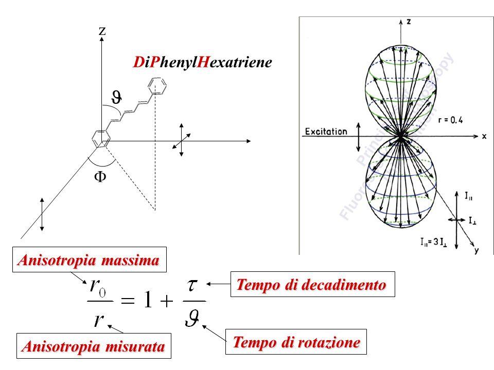 z DiPhenylHexatriene Tempo di rotazione Tempo di decadimento Anisotropia massima Anisotropia misurata