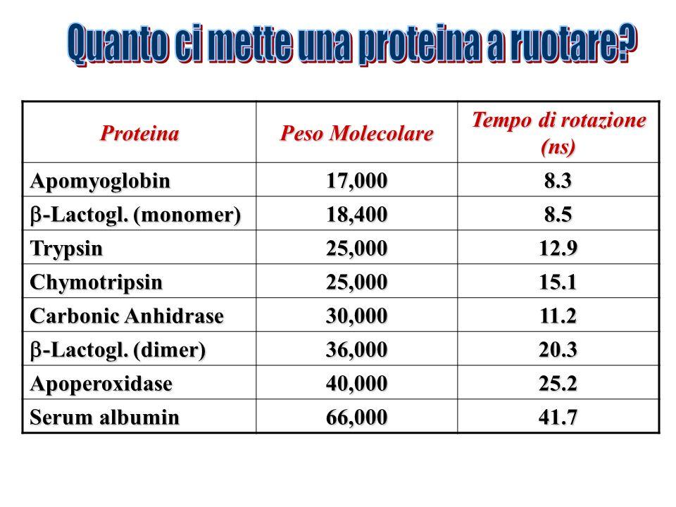 Proteina Peso Molecolare Tempo di rotazione (ns) Apomyoglobin17,0008.3 -Lactogl. (monomer) -Lactogl. (monomer)18,4008.5 Trypsin25,00012.9 Chymotripsin