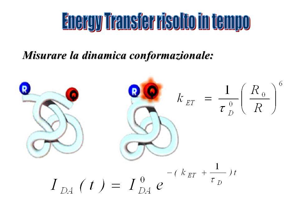 Misurare la dinamica conformazionale: