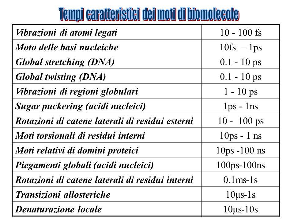 Vibrazioni di atomi legati10 - 100 fs Moto delle basi nucleiche10fs – 1ps Global stretching (DNA)0.1 - 10 ps Global twisting (DNA)0.1 - 10 ps Vibrazio