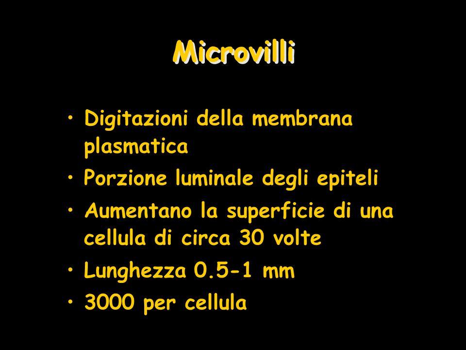 Microvilli Digitazioni della membrana plasmatica Porzione luminale degli epiteli Aumentano la superficie di una cellula di circa 30 volte Lunghezza 0.