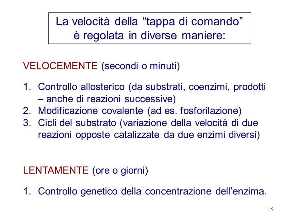 15 VELOCEMENTE (secondi o minuti) 1.Controllo allosterico (da substrati, coenzimi, prodotti – anche di reazioni successive) 2.Modificazione covalente