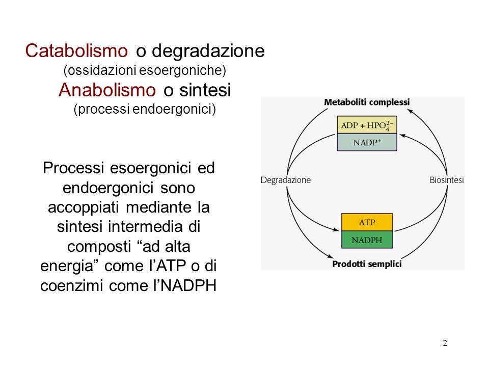 2 Catabolismo o degradazione (ossidazioni esoergoniche) Anabolismo o sintesi (processi endoergonici) Processi esoergonici ed endoergonici sono accoppiati mediante la sintesi intermedia di composti ad alta energia come lATP o di coenzimi come lNADPH