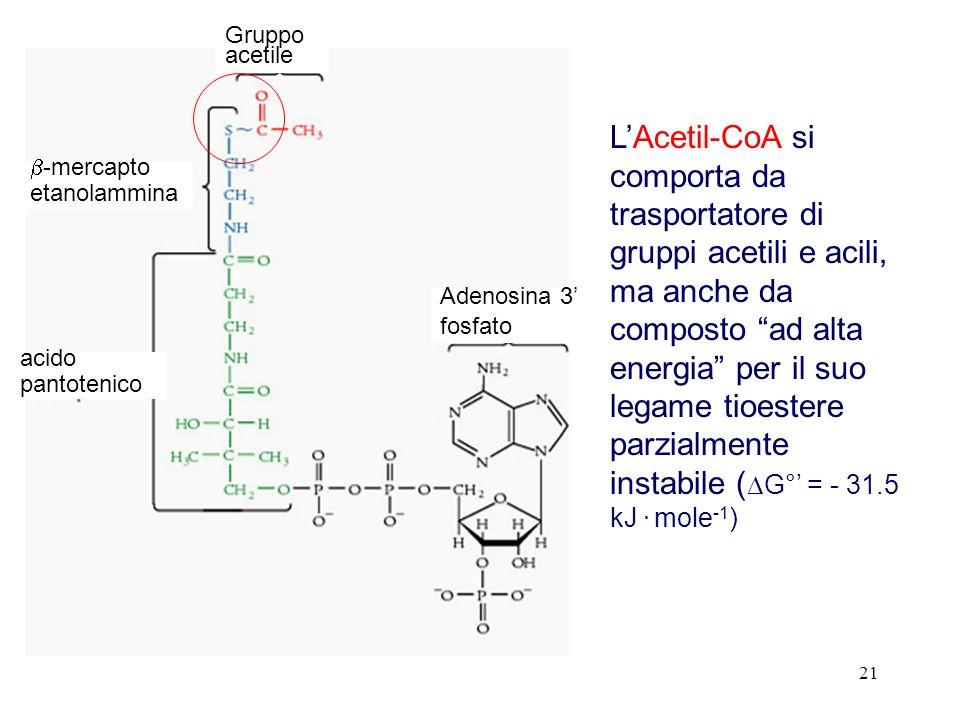 21 LAcetil-CoA si comporta da trasportatore di gruppi acetili e acili, ma anche da composto ad alta energia per il suo legame tioestere parzialmente instabile ( G° = - 31.5 kJ.