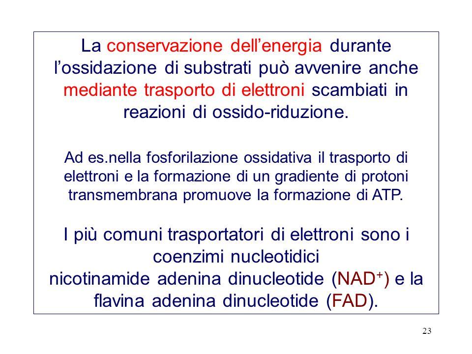 23 La conservazione dellenergia durante lossidazione di substrati può avvenire anche mediante trasporto di elettroni scambiati in reazioni di ossido-r