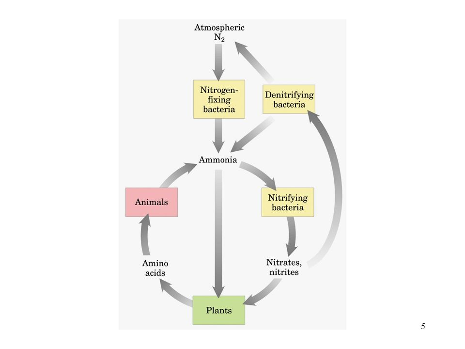 36 Il potenziale di riduzione di una specie molecolare risente delle condizioni al contorno; ad es.