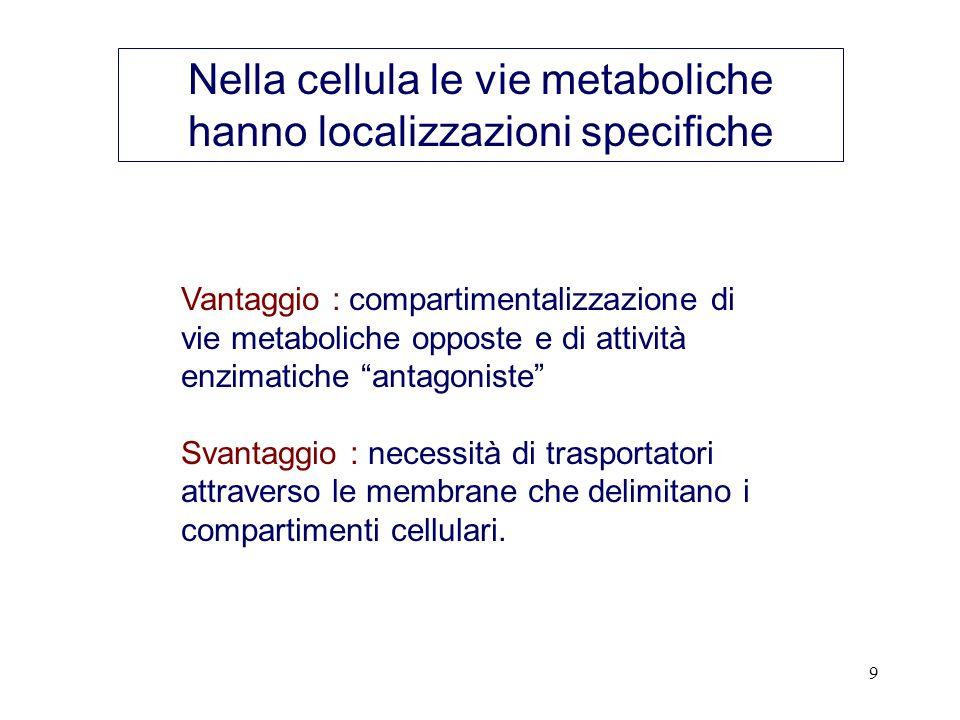 9 Nella cellula le vie metaboliche hanno localizzazioni specifiche Vantaggio : compartimentalizzazione di vie metaboliche opposte e di attività enzimatiche antagoniste Svantaggio : necessità di trasportatori attraverso le membrane che delimitano i compartimenti cellulari.