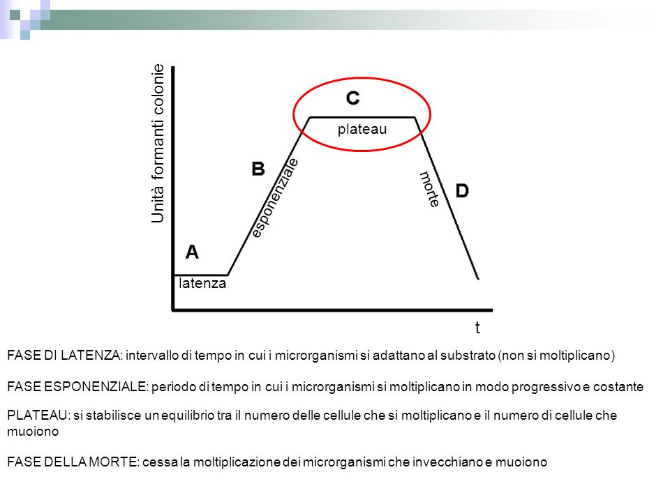 FASE DI LATENZA: intervallo di tempo in cui i microrganismi si adattano al substrato (non si moltiplicano) FASE ESPONENZIALE: periodo di tempo in cui