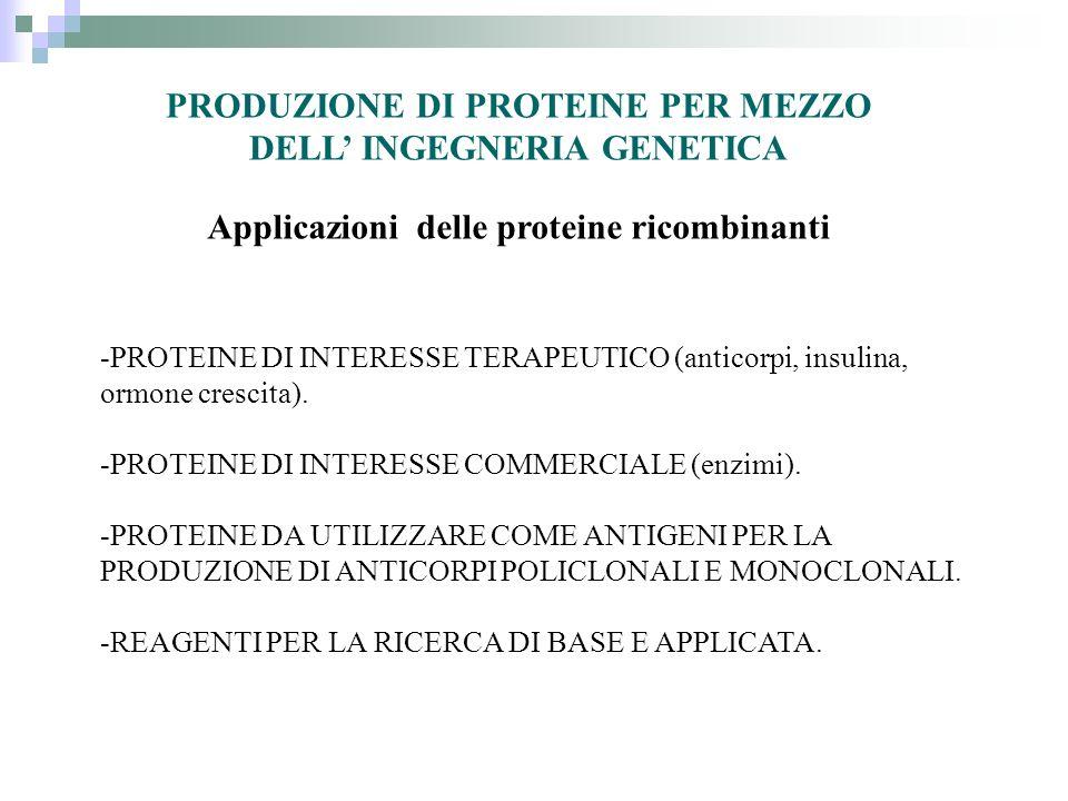 Sistemi di espressione Procariotici (E.Coli) Eucariotici: Saccharomyces Cerevisiae (lievito) Cellule di insetto (Baculovirus) Cellule di mammifero in coltura (CHO etc.) Animali transgenici Piante transgeniche