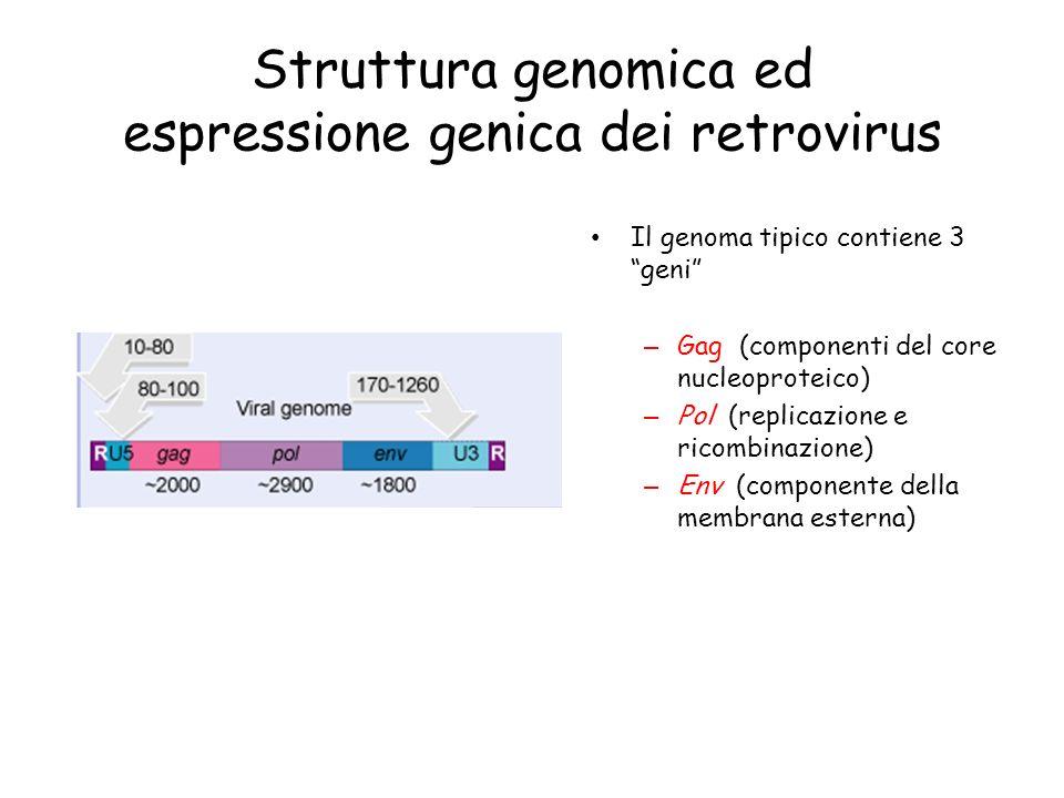 Struttura genomica ed espressione genica dei retrovirus Il genoma tipico contiene 3 geni – Gag (componenti del core nucleoproteico) – Pol (replicazion