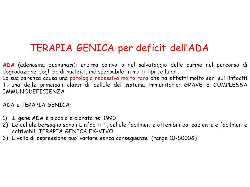 ADA (adenosina deaminasi): enzima coinvolto nel salvataggio delle purine nel percorso di degradazione degli acidi nucleici, indispensabile in molti ti