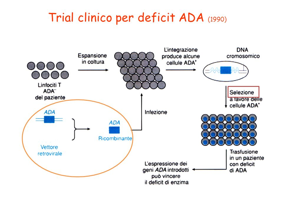 Trial clinico per deficit ADA (1990)