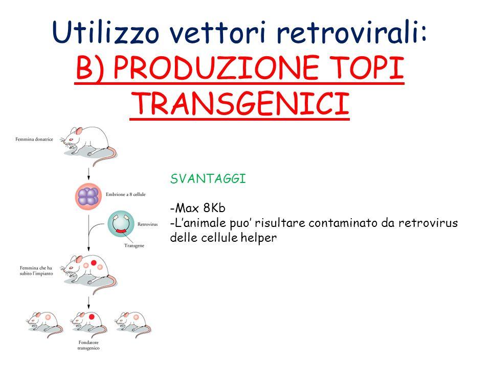 Utilizzo vettori retrovirali: B) PRODUZIONE TOPI TRANSGENICI SVANTAGGI -Max 8Kb -Lanimale puo risultare contaminato da retrovirus delle cellule helper