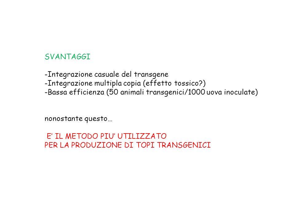 SVANTAGGI -Integrazione casuale del transgene -Integrazione multipla copia (effetto tossico?) -Bassa efficienza (50 animali transgenici/1000 uova inoc