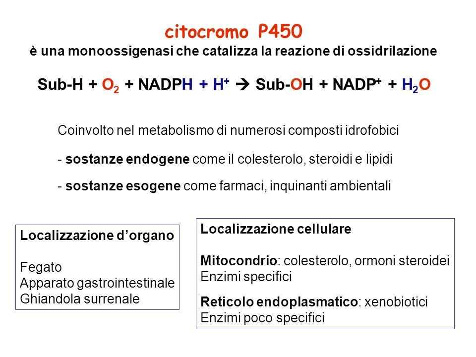 sistema di trasporto coinvolge una flavoproteina ed una proteina Fe-S membrana mitocondriale interna 2 H + NADPH + H + NADP + FAD citocromo P450 reduttasi FADH 2 Fe 3- eme S-OH S-H O2O2 Cit P450 Fe 2- eme H2OH2O NADPH + H + NADP + FAD Fe 2+ -S Fe 3- eme S-OH S-H O2O2 2 H + Fe 3+ -S FLAVOPROTEINA adrenodossina reduttasi FADH 2 Cit P450 Fe 2- eme H2OH2O PROTEINA Fe-S adrenodossina sistema di trasporto microsomiale del citocromo P450