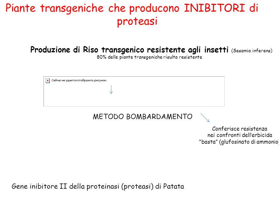 Piante transgeniche che producono INIBITORI di proteasi Produzione di Riso transgenico resistente agli insetti (Sesamia inferens) 80% delle piante transgeniche risulta resistente METODO BOMBARDAMENTO Gene inibitore II della proteinasi (proteasi) di Patata Conferisce resistenza nei confronti dellerbicida basta (glufosinato di ammonio)