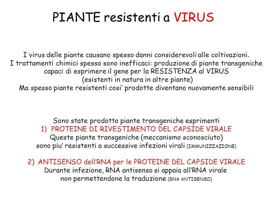 PIANTE resistenti a VIRUS I virus delle piante causano spesso danni considerevoli alle coltivazioni.