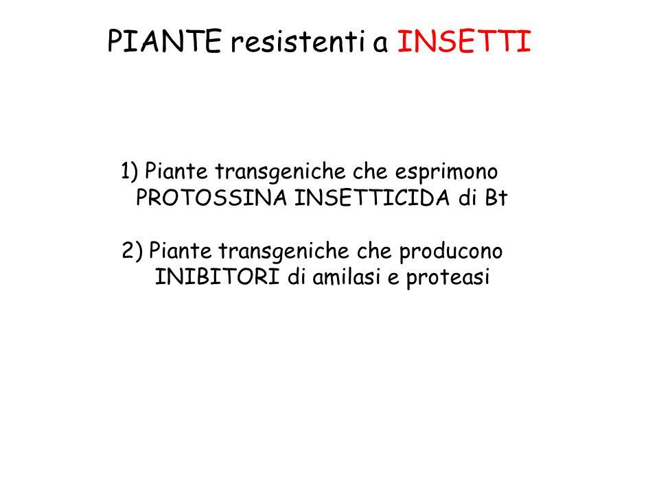 PIANTE resistenti a INSETTI 1)Piante transgeniche che esprimono PROTOSSINA INSETTICIDA di Bt 2) Piante transgeniche che producono INIBITORI di amilasi e proteasi