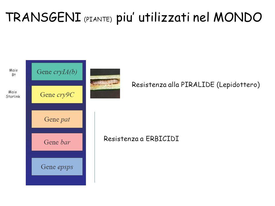 TRANSGENI (PIANTE) piu utilizzati nel MONDO Resistenza alla PIRALIDE (Lepidottero) Mais Bt Mais Starlink Resistenza a ERBICIDI