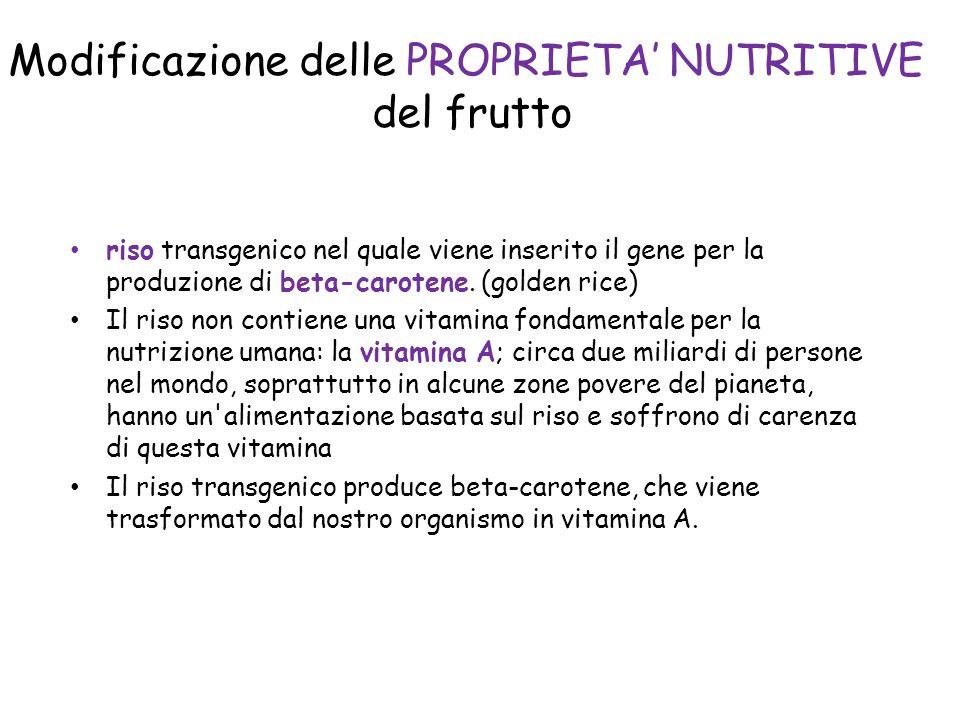 Modificazione delle PROPRIETA NUTRITIVE del frutto riso transgenico nel quale viene inserito il gene per la produzione di beta-carotene.