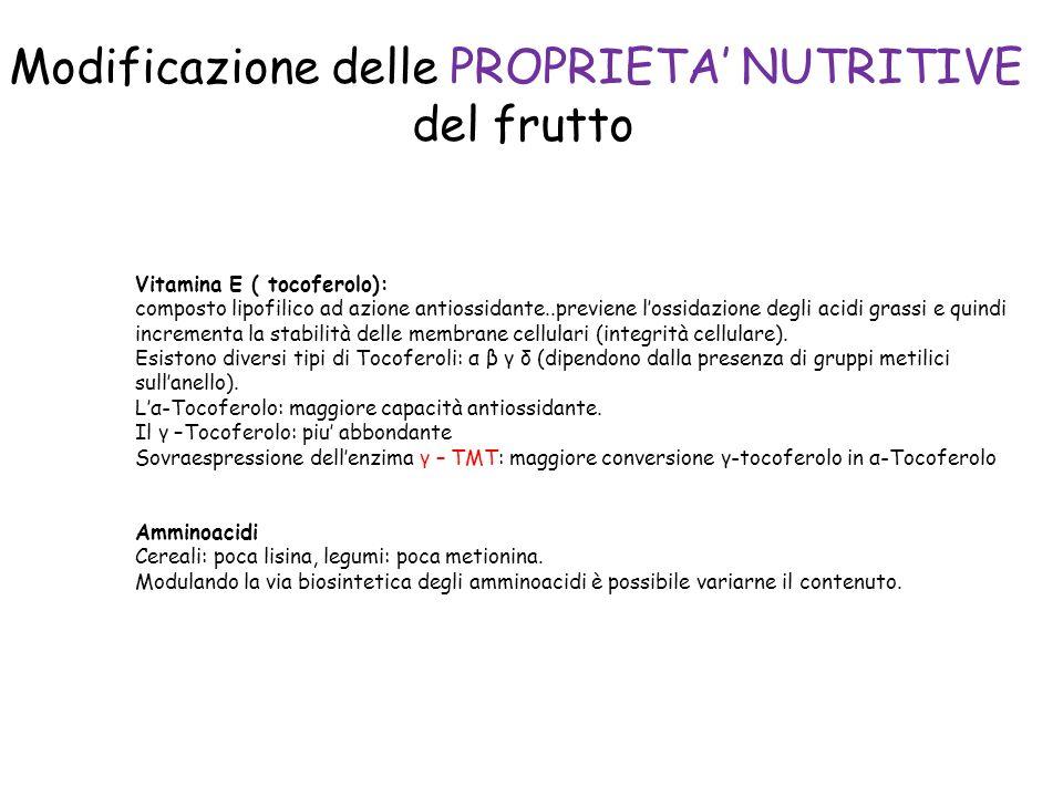 Vitamina E ( tocoferolo): composto lipofilico ad azione antiossidante..previene lossidazione degli acidi grassi e quindi incrementa la stabilità delle membrane cellulari (integrità cellulare).