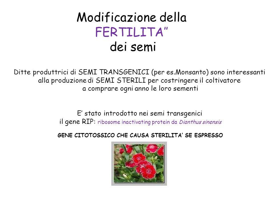 Modificazione della FERTILITA dei semi Ditte produttrici di SEMI TRANSGENICI (per es.Monsanto) sono interessanti alla produzione di SEMI STERILI per c
