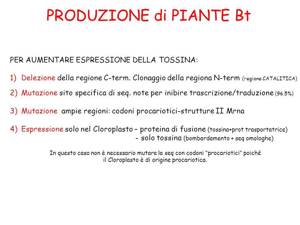 PRODUZIONE di PIANTE Bt PER AUMENTARE ESPRESSIONE DELLA TOSSINA: 1)Delezione della regione C-term. Clonaggio della regiona N-term (regione CATALITICA)