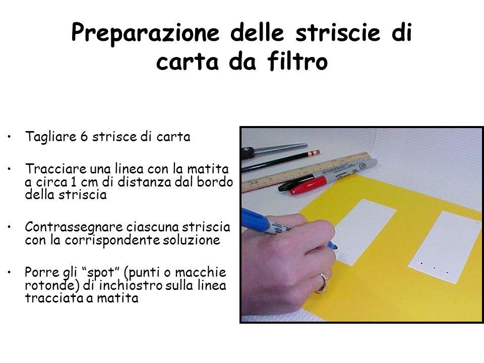 Preparazione delle striscie di carta da filtro Tagliare 6 strisce di carta Tracciare una linea con la matita a circa 1 cm di distanza dal bordo della