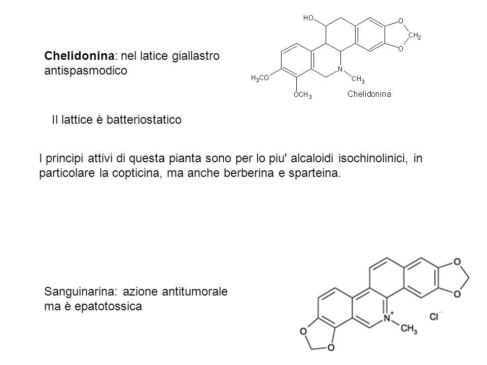 Chelidonina: nel latice giallastro antispasmodico Il lattice è batteriostatico Sanguinarina: azione antitumorale ma è epatotossica I principi attivi d
