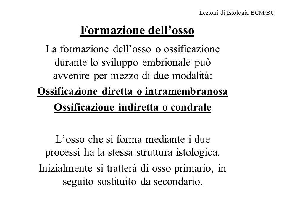 Formazione dellosso La formazione dellosso o ossificazione durante lo sviluppo embrionale può avvenire per mezzo di due modalità: Ossificazione dirett