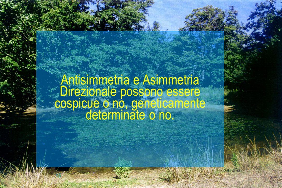 15 Antisimmetria e Asimmetria Direzionale possono essere cospicue o no, geneticamente determinate o no.