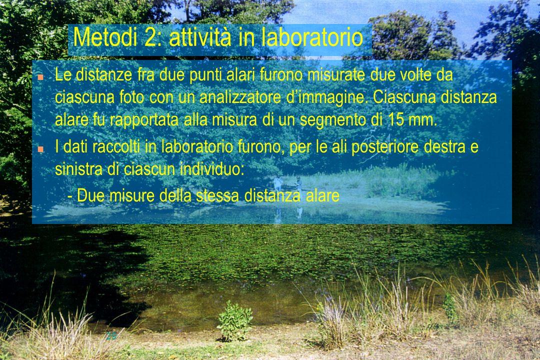 29 Metodi 2: attività in laboratorio n Le distanze fra due punti alari furono misurate due volte da ciascuna foto con un analizzatore dimmagine. Ciasc