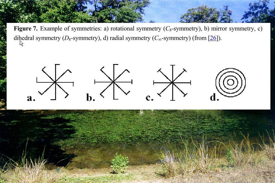10 Le deviazioni dalla perfetta simmetria negli organismi bilateri possono essere classificate dalle loro frequenze in un gruppo di individui in Asimmetria Direzionale, Antisimmetria e Asimmetria Fluttuante (Ludwig, 1932 )