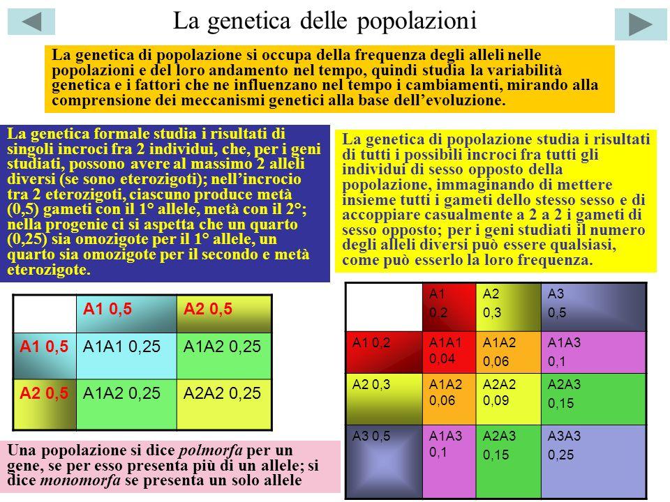 La genetica delle popolazioni La genetica di popolazione si occupa della frequenza degli alleli nelle popolazioni e del loro andamento nel tempo, quindi studia la variabilità genetica e i fattori che ne influenzano nel tempo i cambiamenti, mirando alla comprensione dei meccanismi genetici alla base dellevoluzione.