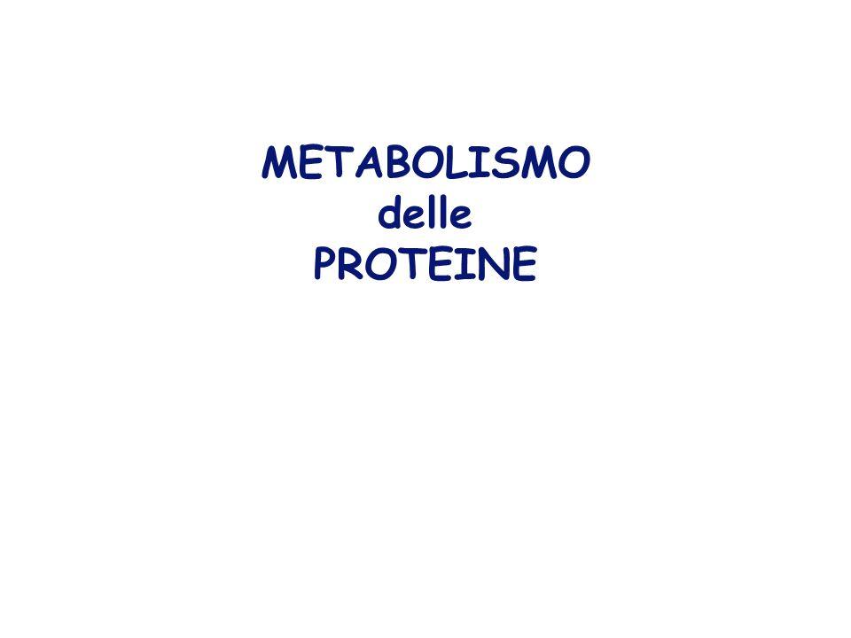UOMO ADULTO: proteine corporee circa 12 Kg 40% nel muscolo di cui 65% miosina ed actina per locomozione e lavoro muscolare, ma anche come fonte di amminoacidi in condizioni di stress.