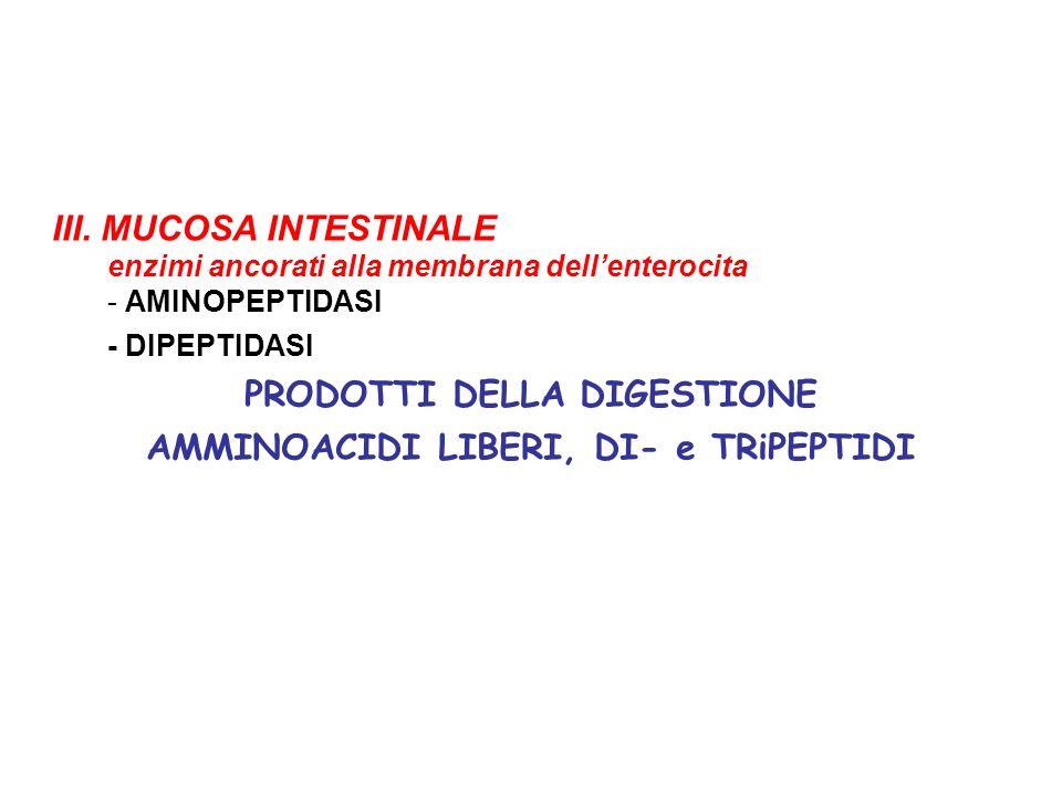 III. MUCOSA INTESTINALE enzimi ancorati alla membrana dellenterocita - AMINOPEPTIDASI - DIPEPTIDASI PRODOTTI DELLA DIGESTIONE AMMINOACIDI LIBERI, DI-