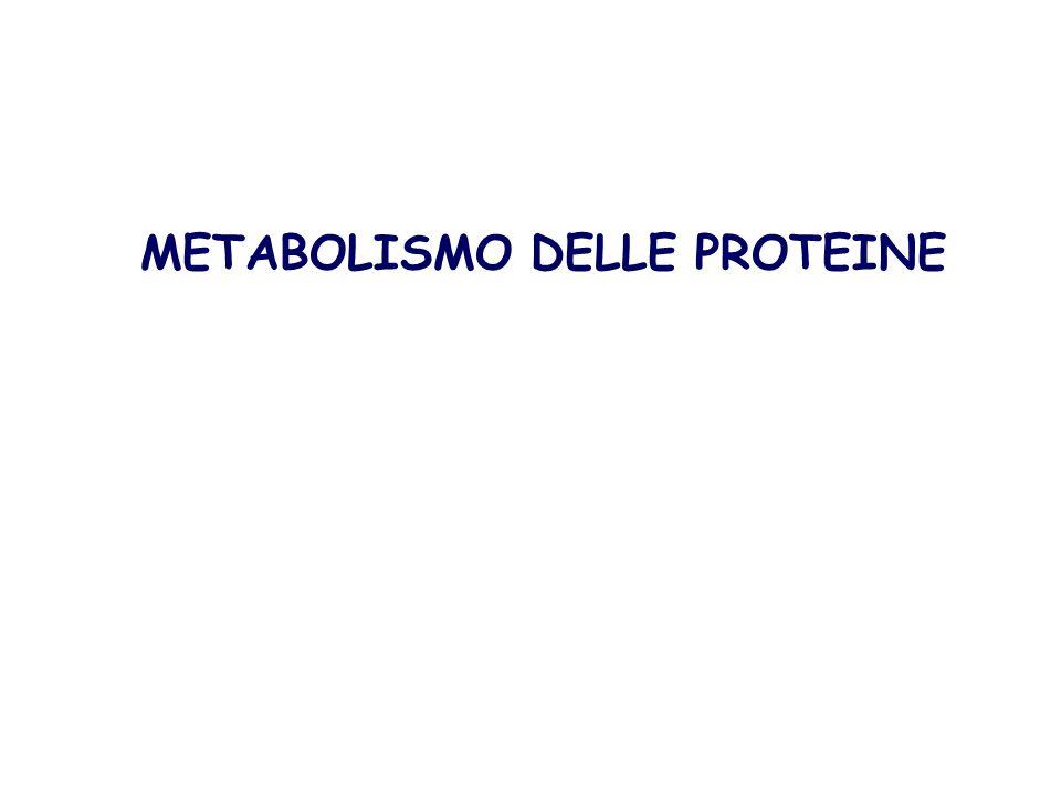 METABOLISMO DELLE PROTEINE