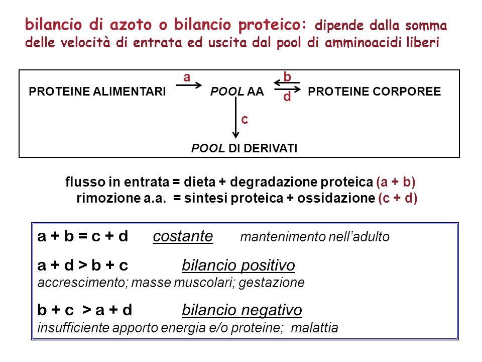 a + b = c + d costante mantenimento nelladulto a + d > b + c bilancio positivo accrescimento; masse muscolari; gestazione b + c > a + d bilancio negat